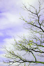 Autumn tree branches Royalty Free Stock Photography