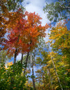 Autumn tree canopy view. Royalty Free Stock Photo