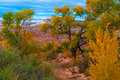 Autumn Tree in the Canyon - Utah Fall Landscape Royalty Free Stock Photo