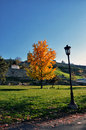 Autumn tree in the city park Royalty Free Stock Photo