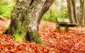 Autumn tree detail of in with leaves and bench Stock Image