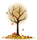 Autumn tree with falling leaves, maple leaves Royalty Free Stock Photo