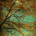 Autumn tree grunge an with golden leaves blue background with effect applied Royalty Free Stock Photos