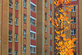 Autumn tree at the habitable high rise background Stock Image