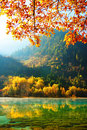 Autumn tree and lake in Jiuzhaigou Royalty Free Stock Photo