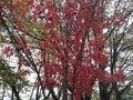 Otoño árbol