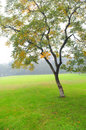 The autumn tree and meadow Royalty Free Stock Photo