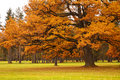 Autumn tree in park Royalty Free Stock Photo