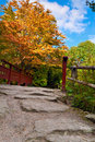 Autumn tree and red wooden bridge with stone laid pathway at the chinese garden royal botanic garden edinburgh scotland Royalty Free Stock Photography