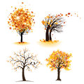 Autumn tree set with leaves Stock Photos