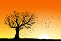Autumn tree silhouette in sunset wind blowing away the falling leaves Stock Photos