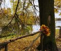 autumn tree trunk nature branch lake water reflection park fence leaves Royalty Free Stock Photo
