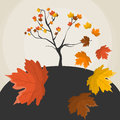 Autumn tree vector illustration with and maple leaves Stock Photography
