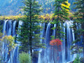 Autumn tree and waterfall in jiuzhaigou Stock Images