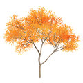 Autumn tree at the white background Royalty Free Stock Images
