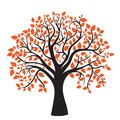 Autumn tree for your design Royalty Free Stock Photography