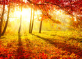 Podzim stromy