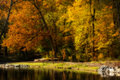 Autumn trees a beautiful scene at a lake park that shows the vibrant colors of reflecting in the water Royalty Free Stock Images
