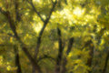 Autumn trees blurred  monocle. Stock Photos