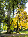 Autumn trees changing into colours Stock Photography
