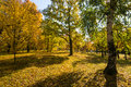 Autumn trees colorful in park Royalty Free Stock Photo