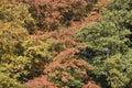 Autumn trees en arnhem Fotos de archivo libres de regalías