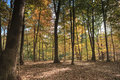 Autumn trees in forest virginia Stock Fotografie