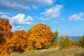 Autumn trees with golden leaves against blue sky with white clouds Royalty Free Stock Photo