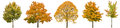 Autumn trees isolated white background Oak maple linden Royalty Free Stock Photo