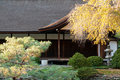 Autumn trees in Japanese garden Royalty Free Stock Photos