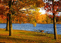 Autumn trees by the lake Royalty Free Stock Photo
