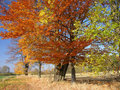Autumn trees Landscape Royalty Free Stock Photo
