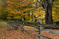 Autumn trees, leaves and fence Royalty Free Stock Photo