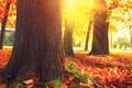 Title: Autumn Trees and Leaves in sun light