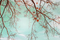 Autumn Trees Leaves In Vintage...