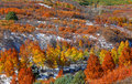 Autumn trees on mount sniffles colorful near dallas divide Stock Images