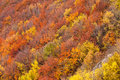 Autumn trees on the mountain hills Royalty Free Stock Photos