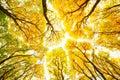 Autumn trees pattern Royalty Free Stock Photo