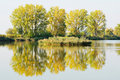 Autumn Trees by a Pond Stock Images