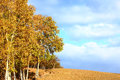 Autumn trees in prairie Royalty Free Stock Image