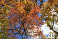 Autumn trees, red green yellow Royalty Free Stock Photo