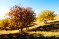 The autumn trees and shadows on the meadow Royalty Free Stock Photo