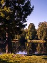 Autumn trees on the shore of a pond in a park in sunny clear wea Royalty Free Stock Photo