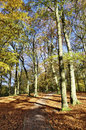 Autumn trees at Talkin Tarn Country Park Royalty Free Stock Photo