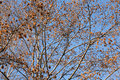 Autumn trees tree branches in on a sunny day Royalty Free Stock Photo