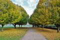Autumn trees tree lined path with fallen leafs Royalty Free Stock Photo