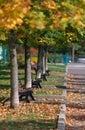 Autumn trees walkway Стоковое фото RF