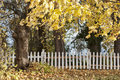 Autumn trees and white fence. Royalty Free Stock Photo