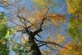 Autumn Treetops Stock Photography