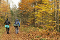 Autumn trekking two guys doing in a quebec forest during the fall season they cary big backpacks and are going somewhere to camp Royalty Free Stock Photography